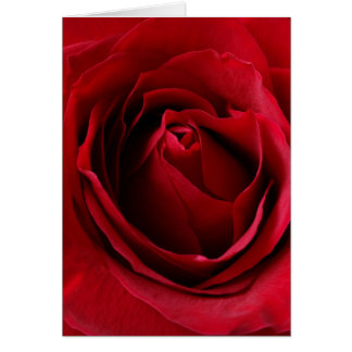 deep red rose card