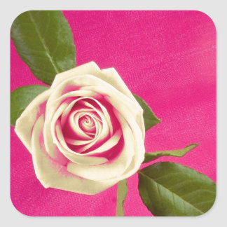 Deep Yellow Rose On Deep Pink Background Square Sticker