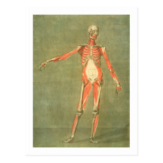 Deeper Muscular System of the Front of the Body, p Postcard