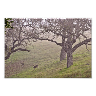 Deer and Trees Photo Print