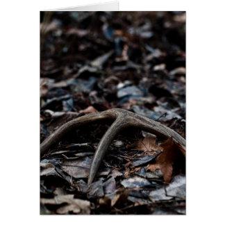 Deer Antler 01 Card