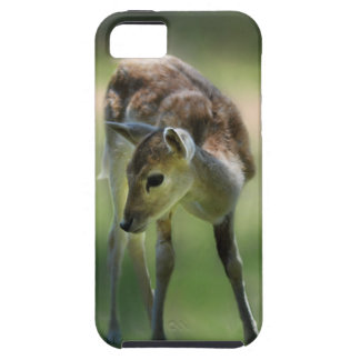 Deer are so sweet iPhone 5 cover