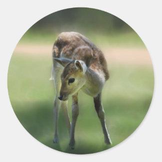 Deer are so sweet round sticker