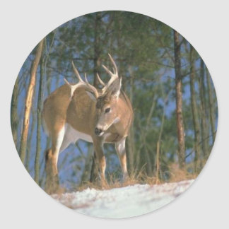 Deer Buck Classic Round Sticker