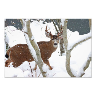Deer Buck in Snow in Winter Photo Print