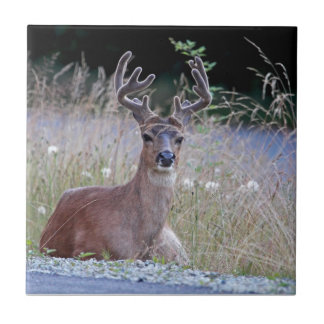 Deer Buck Lying Down Small Square Tile