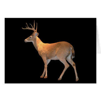 Deer (Buck) White-Tailed Card