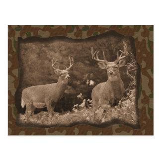 Deer Camo Postcard