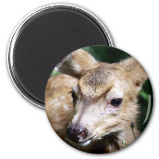Deer Closeup Refrigerator Magnet