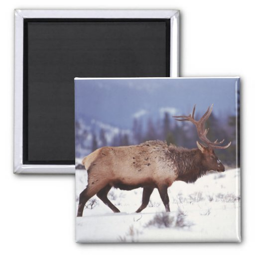 Deer Country Magnets