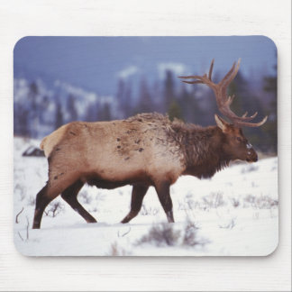 Deer Country Mouse Pad
