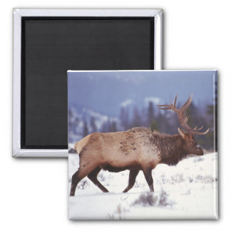 Deer Country Square Magnet