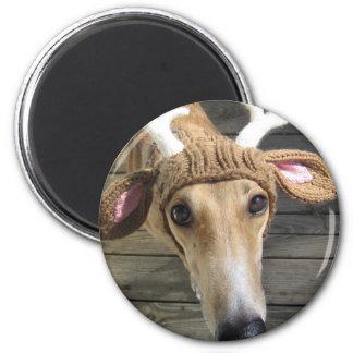 Deer dog - cute dog - whippet magnet