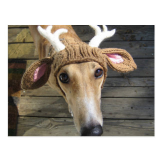 Deer dog - cute dog - whippet postcard