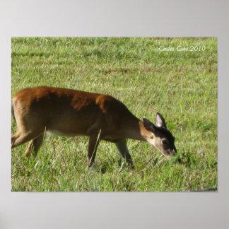 Deer eating in Cades Cove Print
