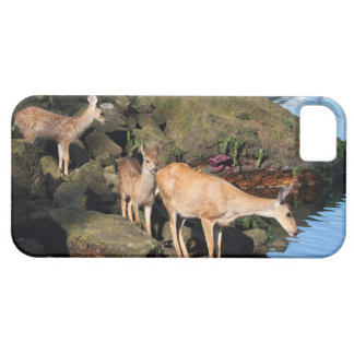 Deer Family with Twin Fawns by the Ocean iPhone 5/5S Case