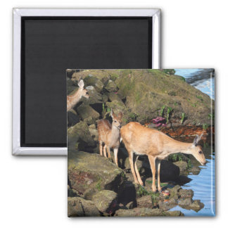 Deer Family with Twin Fawns by the Ocean Magnets