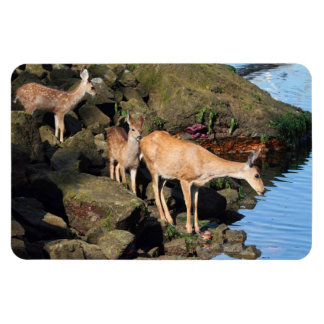 Deer Family with Twin Fawns by the Ocean Rectangle Magnets
