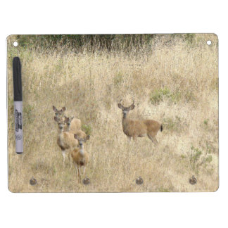 Deer Fawns Wildlife Animals Photography Dry Erase Board With Key Ring Holder