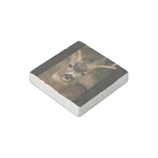 deer stone magnet