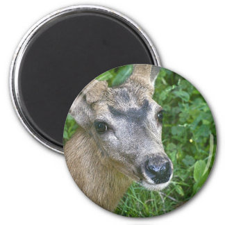 Deer Glance.jpg 6 Cm Round Magnet