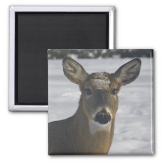 Deer Head Magnet