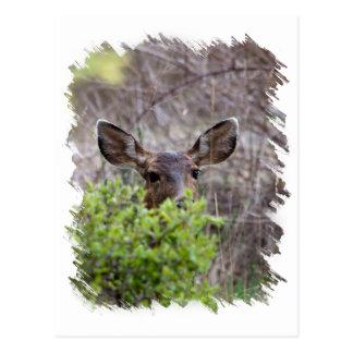 Deer hiding in bushes postcard
