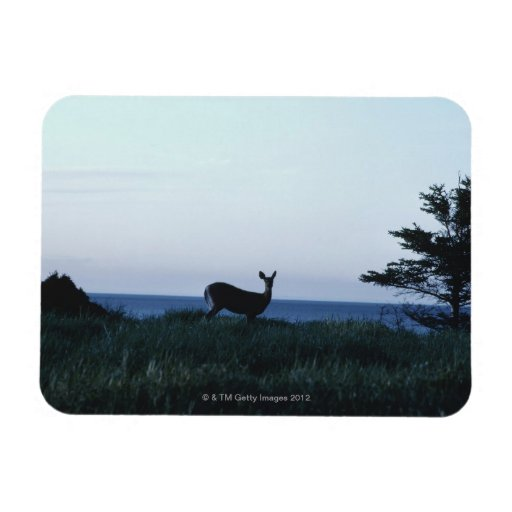 Deer in field by ocean rectangular magnet