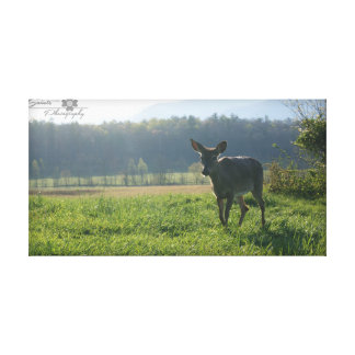 Deer in Mist, Cades Cove Canvas Print