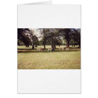 Deer in Richmond Park Card