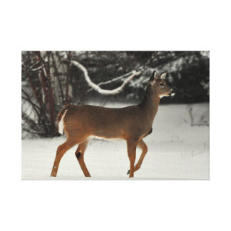 Deer in Snow Stretched Canvas Print