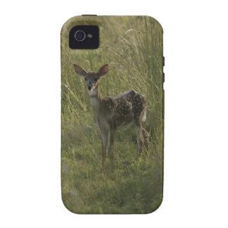 Deer in tall grass Case-Mate iPhone 4 case