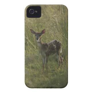 Deer in tall grass Case-Mate iPhone 4 cases