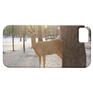 Deer in the city iPhone 5 covers