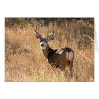 Deer in the Fall Card