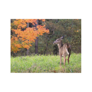 Deer In the Field Wood Poster