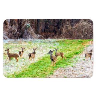 Deer in the Frost Rectangular Photo Magnet