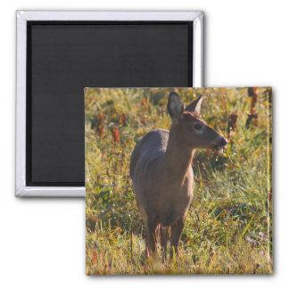 Deer In The Meadow Magnet