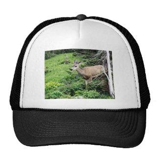Deer in the Woods Cap