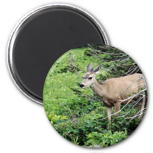 Deer in the Woods Refrigerator Magnet
