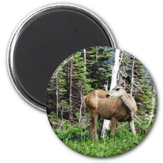 Deer in the Woods Magnets