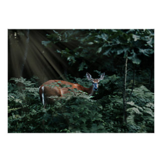 Deer in the Woods with Sunlight Streaming Poster