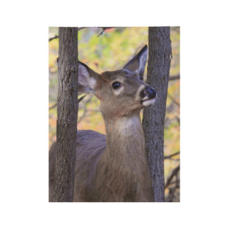 Deer In the Woods Wood Poster