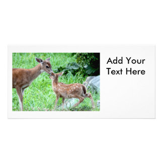 Deer Kissing Fawn Photo Greeting Card