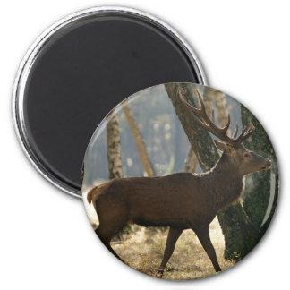 deer refrigerator magnet