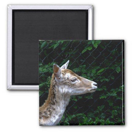 Deer Refrigerator Magnets