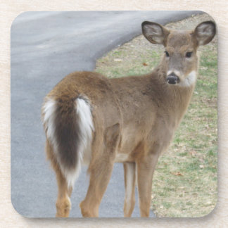 Deer On A 6 Piece Coaster Set