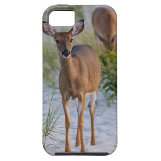 Deer on Beach iPhone 5 Covers