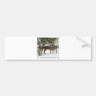 Deer on the way to church.. .jpg bumper sticker