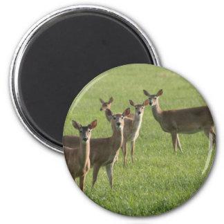 Deer Paradise 6 Cm Round Magnet